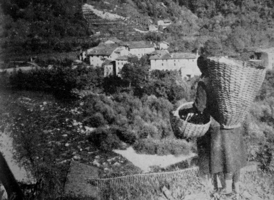 Donne del Friuli