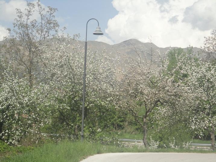 fioritura (2)