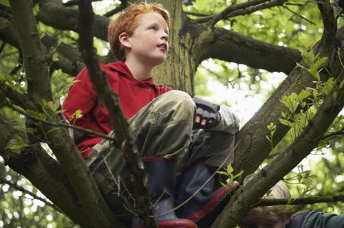 Boy Sitting on Branch