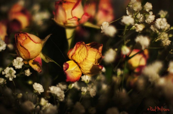 beauty wilted by time, lost hopes, dead roses